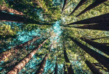 Campamento «El Bosque Encantado» en Inglés Divertido Centro