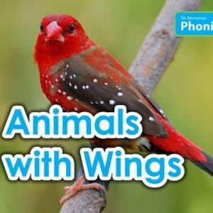 animals-with-wings-ingles-divertido