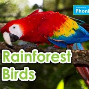 rainforest-birds-ingles-divertido