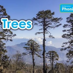 trees-ingles-divertido
