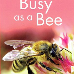 busy-as-a-bee-level-1-ingles-divertido