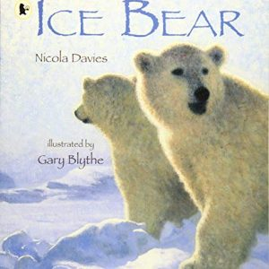 ice-bear-ingles-divertido